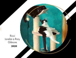 Ricci, Lorelai a Rory Gilmore - Zobrazit knihu