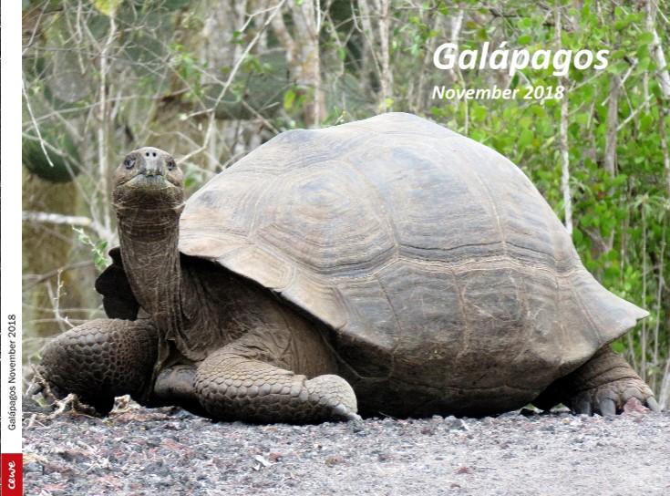 Galápagos November 2018