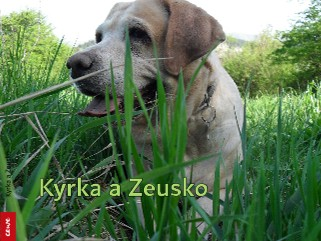 Kyrka a Zeusko - Zobrazit knihu