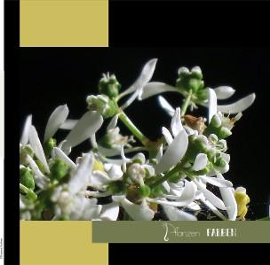 Pflanzen Farben - jetzt anschauen