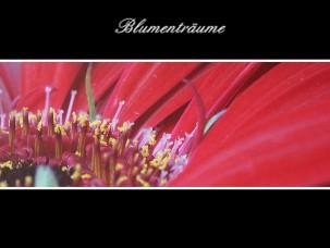 Blumenträume - jetzt anschauen