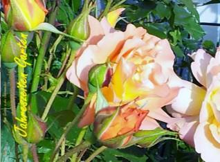 Mein Garten in den Jahreszeiten - jetzt anschauen
