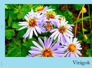Virágok - Megtekintés