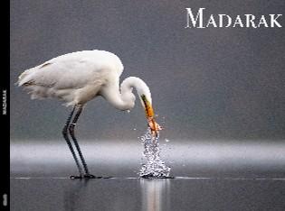 MADARAK - Megtekintés