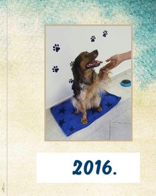 Godina prijateljstva - 2016. - Pregled