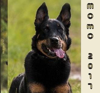 Momo 2017 - jetzt anschauen