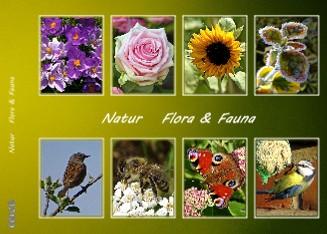 Natur Flora & Fauna - jetzt anschauen