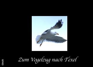 Zum Vogelzug nach Texel - jetzt anschauen