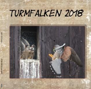 Karin Gottfreund-Müller Turmfalken 2018 - jetzt anschauen