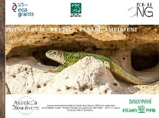 Asociaţia Biounivers - Foto album - reptile - Vizualizare