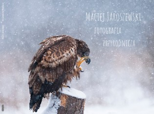Maciej jaroszewski fotografia przyrodnicza - Zobacz teraz