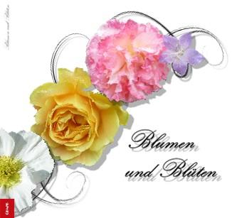 Blumen und Blüten - jetzt anschauen