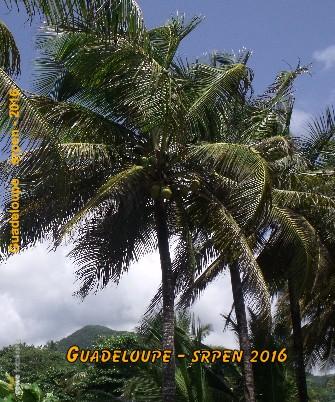 Guadeloupe srpen - 2016 - Zobrazit knihu