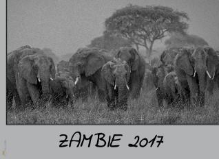 Zambie - Zobrazit knihu