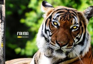 10 let s Nikonem - Fauna - Zobrazit knihu