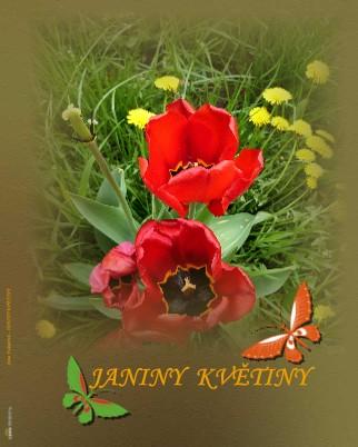 Jana Fukarová - JANINY KVĚTINY - Zobrazit knihu